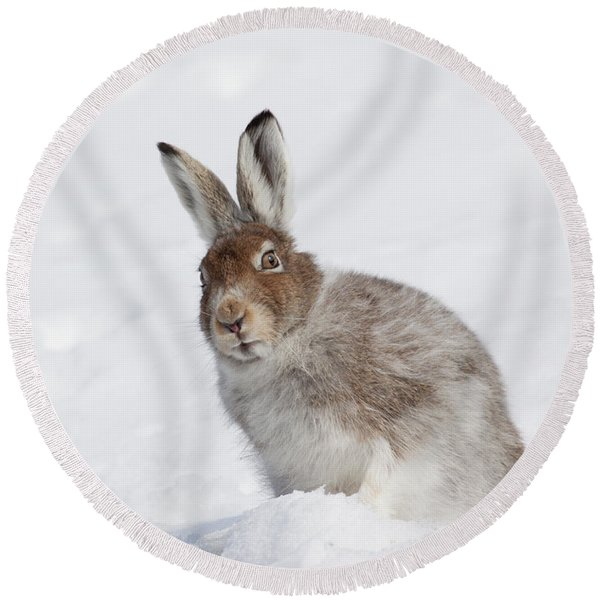 Mountain Hare In Winter Round Beach Towel