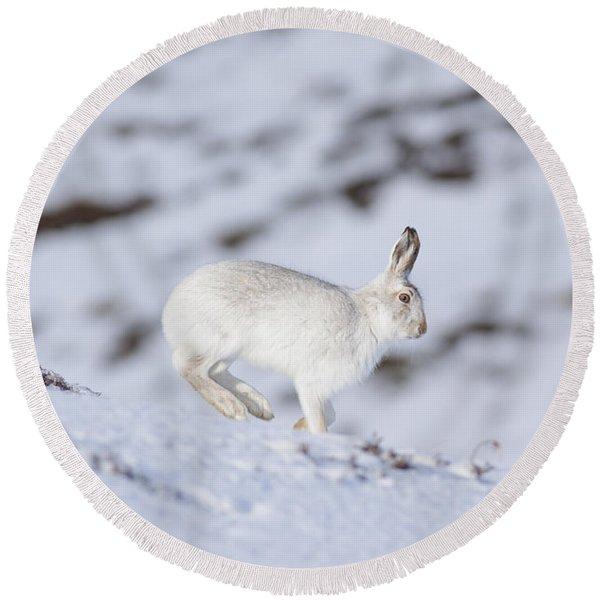 Mountain Hare - Scottish Highlands  #12 Round Beach Towel