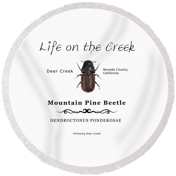 Mountain Pine Beetle Color Round Beach Towel