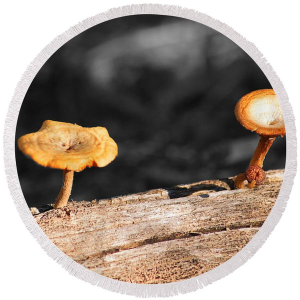 Mushrooms On A Branch Round Beach Towel