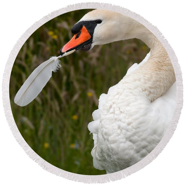 Mute Swan With Feather Round Beach Towel