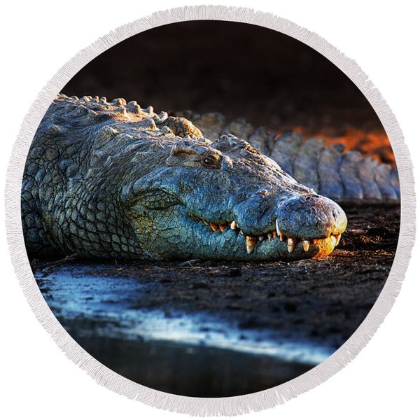 Nile Crocodile On Riverbank-1 Round Beach Towel