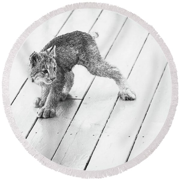 Round Beach Towel featuring the photograph Ninja Lynx Kitty Bw by Tim Newton