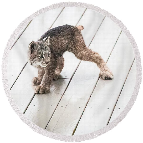 Round Beach Towel featuring the photograph Ninja Lynx Kitty by Tim Newton