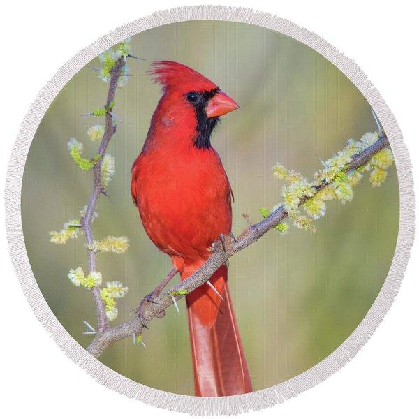 Northern Cardinal Cfh175894 Round Beach Towel