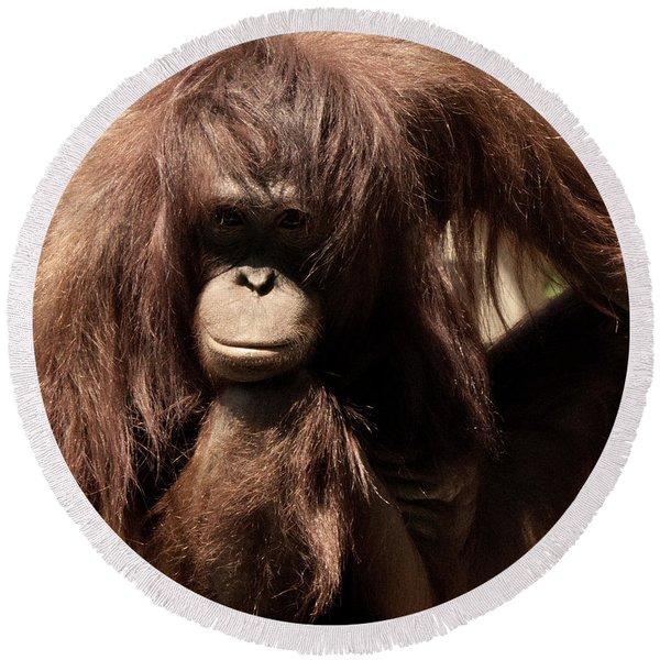 Orangutan Pose Round Beach Towel