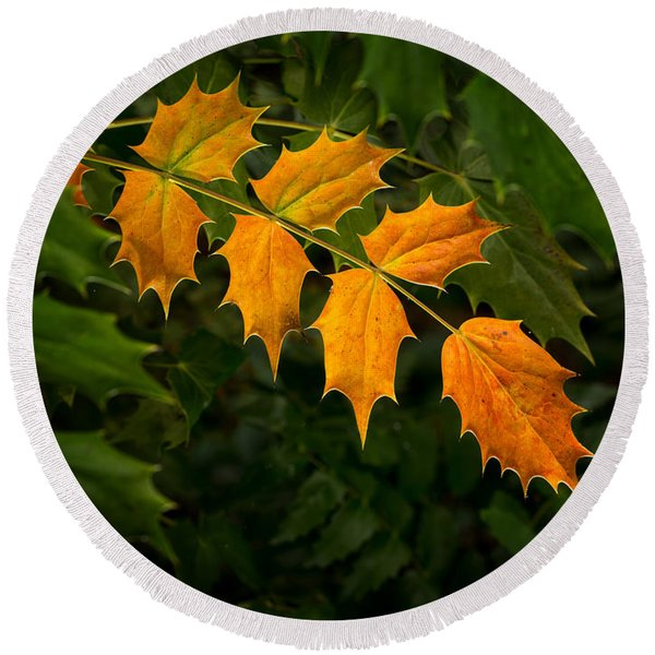 Oregon Grape Autumn Round Beach Towel