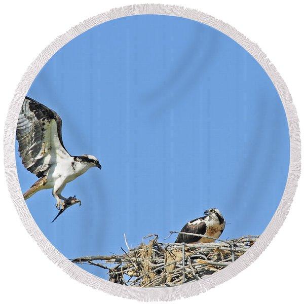 Osprey Brings Fish To Nest Round Beach Towel