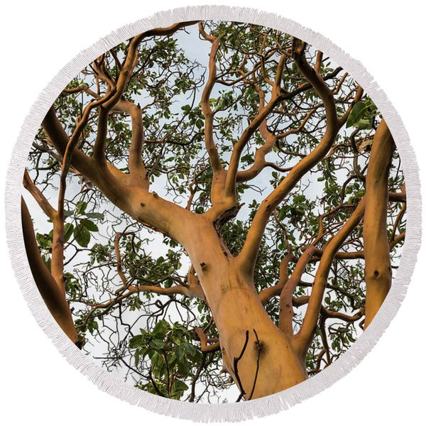 Pacific Madrone Trees Round Beach Towel