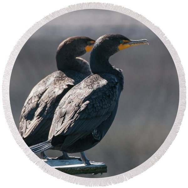Pair Double-crested Cormorant 3 March 2018 Round Beach Towel