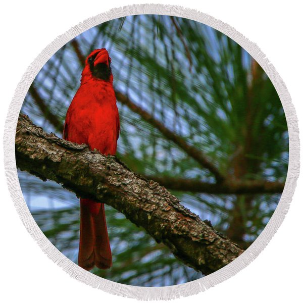 Perched Cardinal Round Beach Towel