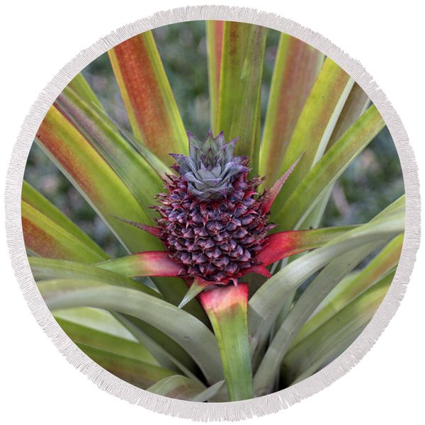 Pineapple, Oahu Round Beach Towel