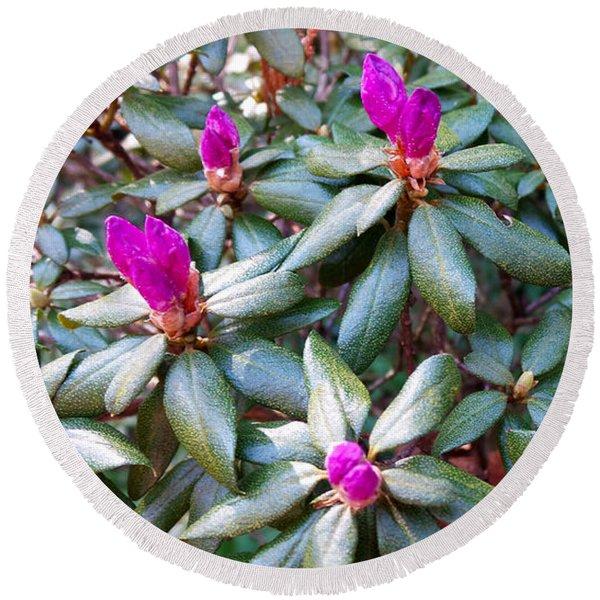 Pink Flowers, Bush Round Beach Towel