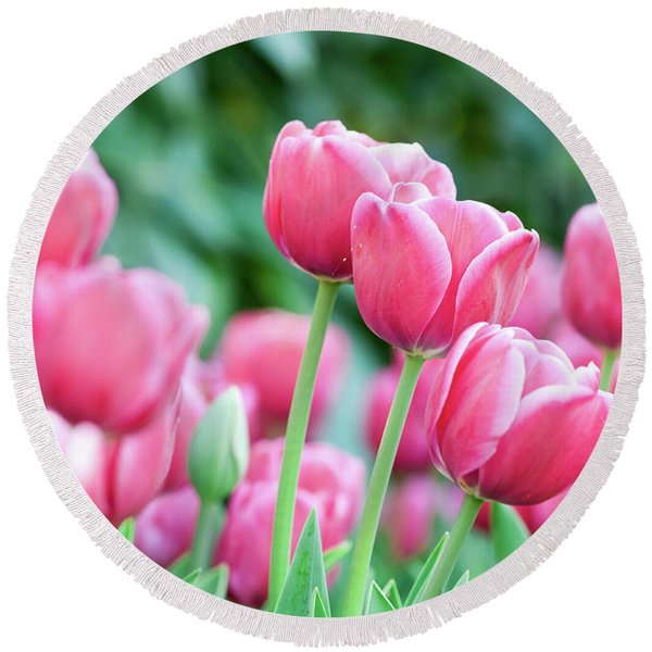 Pink Tulips 716 Round Beach Towel