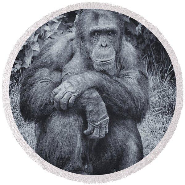 Portrait Of A Chimp Round Beach Towel