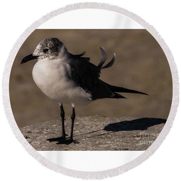 Posing Laughing Gull Round Beach Towel