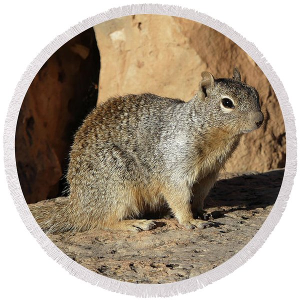 Posing Squirrel Round Beach Towel