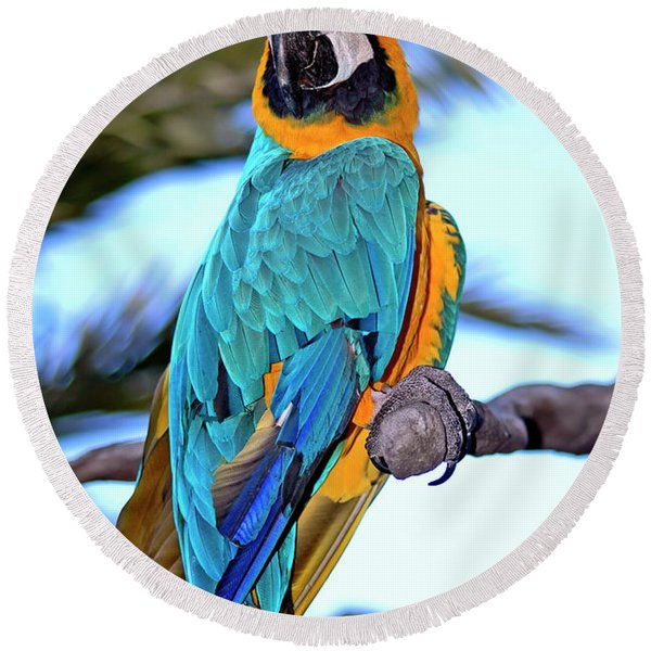Round Beach Towel featuring the photograph Pretty Parrot by Carolyn Marshall