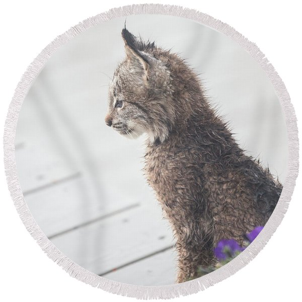Round Beach Towel featuring the photograph Profile In Kitten by Tim Newton