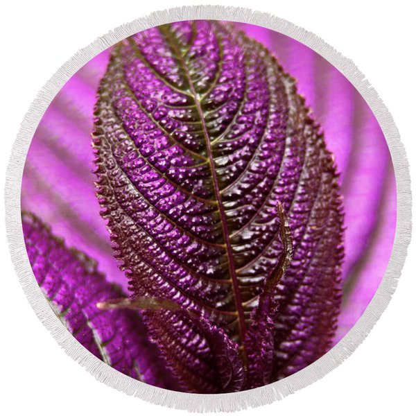 Round Beach Towel featuring the photograph Purple Coleus by Carolyn Marshall