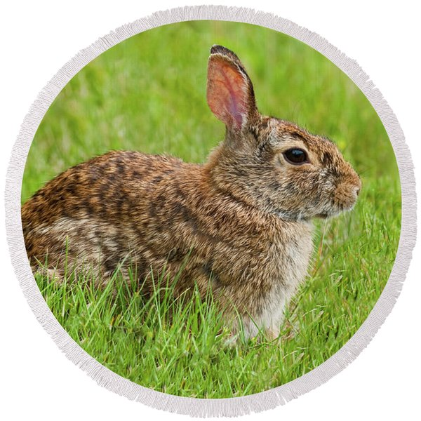 Rabbit In A Grassy Meadow Round Beach Towel