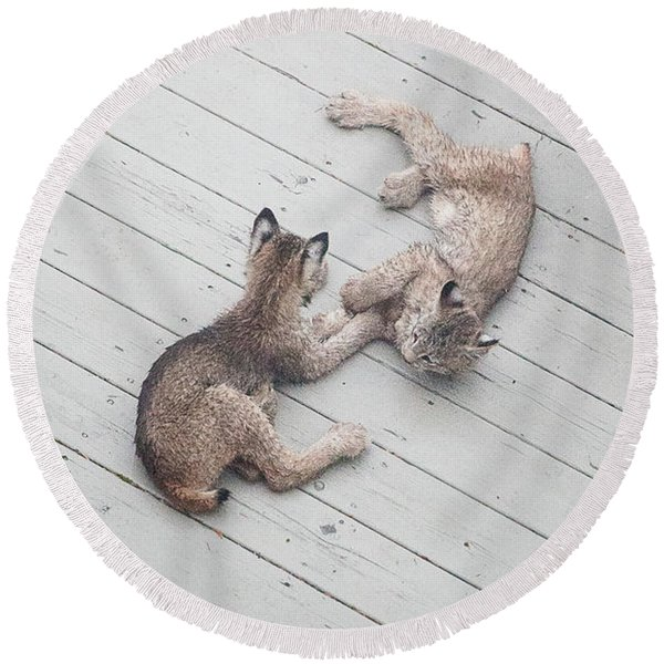 Round Beach Towel featuring the photograph Wrestling Lynx by Tim Newton