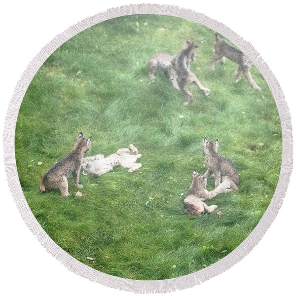 Round Beach Towel featuring the photograph Play Together Prey Together by Tim Newton