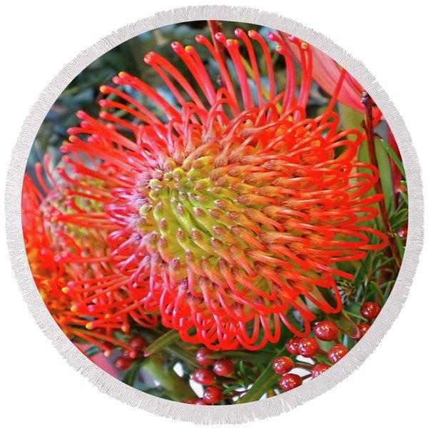 Red Banksia Garden By Kaye Menner Round Beach Towel