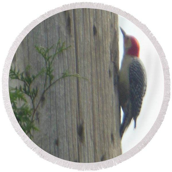 Red Bellied Woodpecker Round Beach Towel
