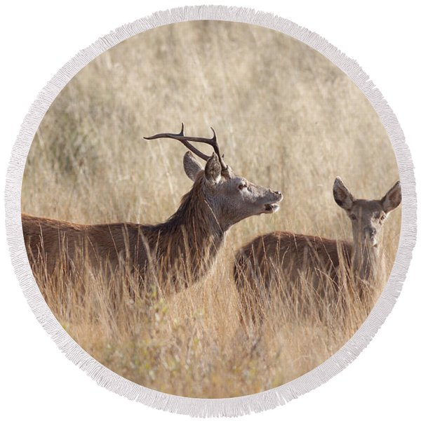 Red Deer Stag And Hind Round Beach Towel