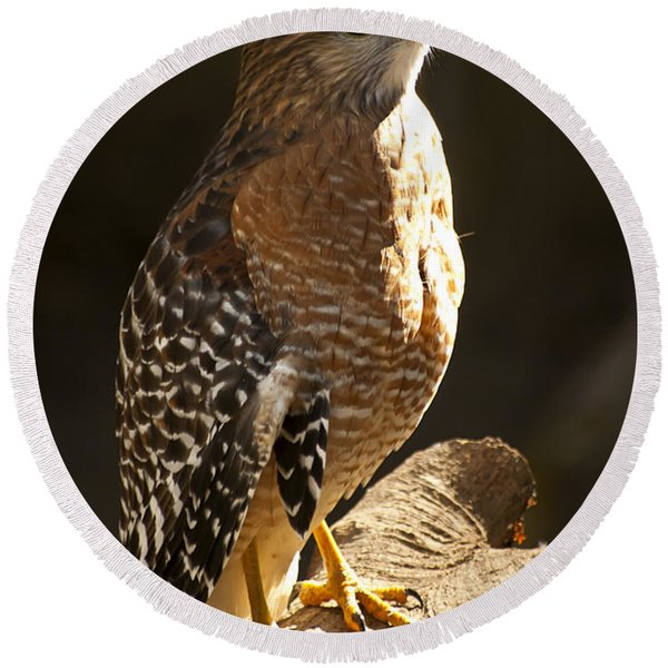 Round Beach Towel featuring the photograph Red-shouldered Hawk by Carolyn Marshall