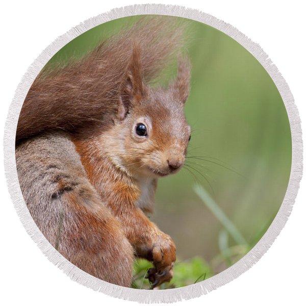 Red Squirrel - Scottish Highlands  #17 Round Beach Towel