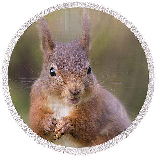 Red Squirrel - Scottish Highlands #18 Round Beach Towel