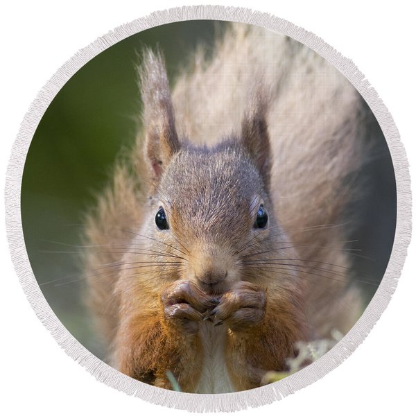 Red Squirrel - Scottish Highlands #28 Round Beach Towel