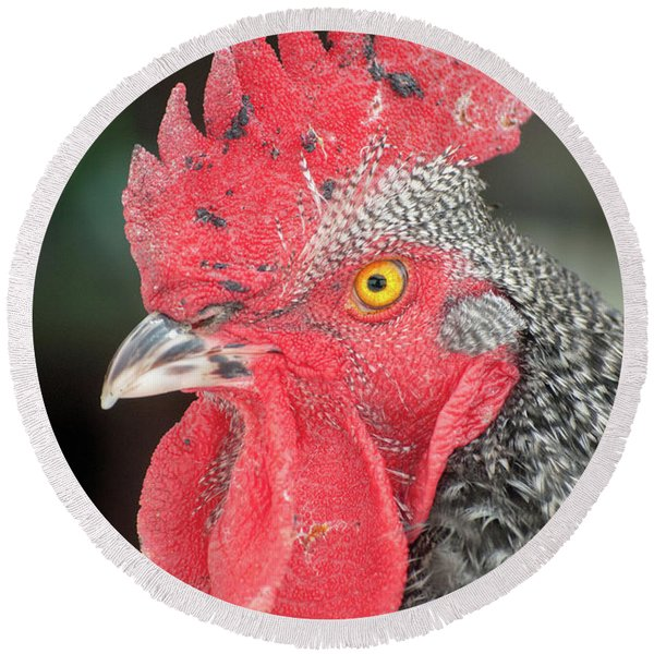 Rooster Named Brute Round Beach Towel