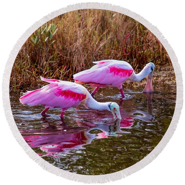 Roseate Spoonbills Swishing For Food Round Beach Towel