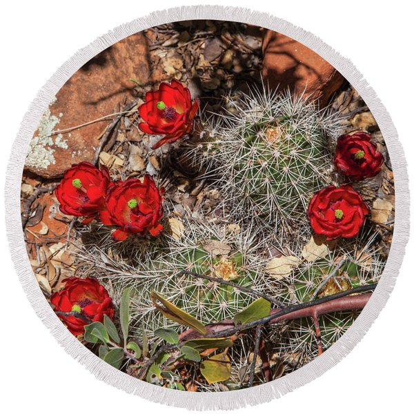 Round Beach Towel featuring the photograph Scarlet Cactus Blooms by Lon Dittrick