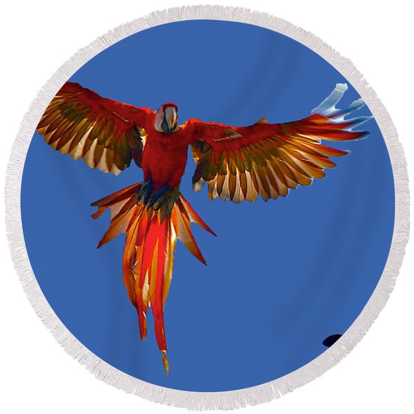Scarlet Macaw On The Osa Peninsula Round Beach Towel