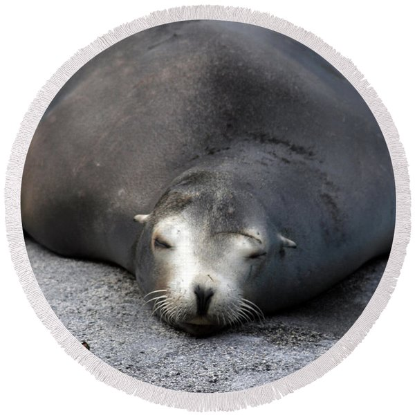 Sea Lion Snooze Round Beach Towel
