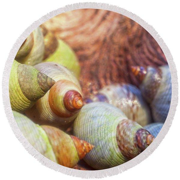 Sea Snails Round Beach Towel