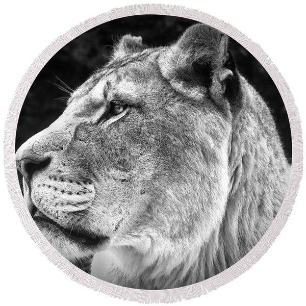 Silver Lioness  Round Beach Towel