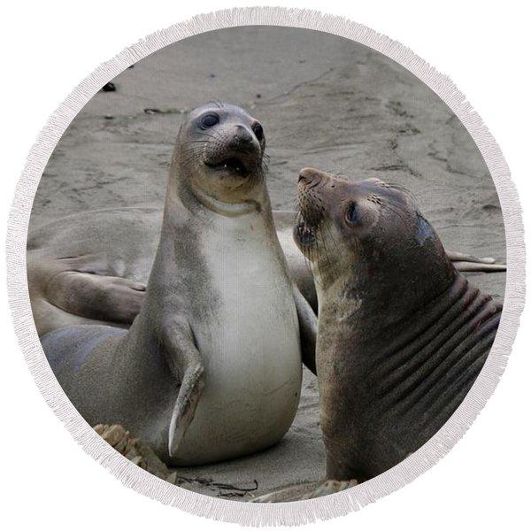 Sparring Seals  Round Beach Towel