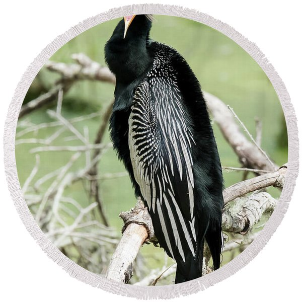 Squawking Anhinga Round Beach Towel