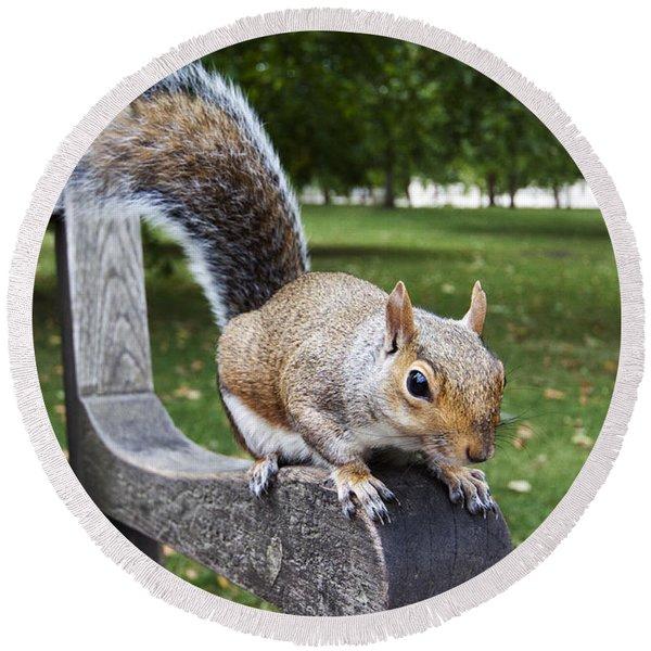 Squirrel Bench Round Beach Towel