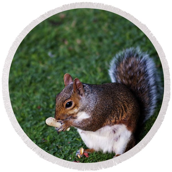 Squirrel Eating Round Beach Towel