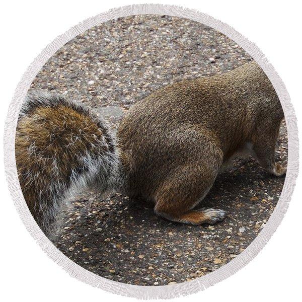 Squirrel Side Round Beach Towel