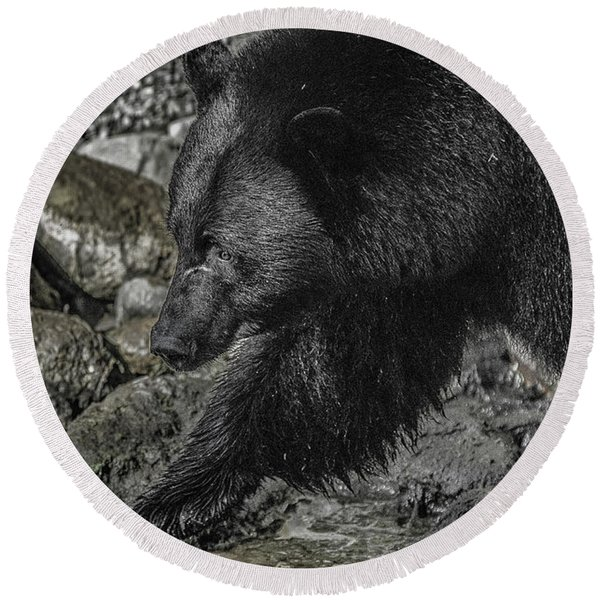 Stepping Into The Creek Black Bear Round Beach Towel