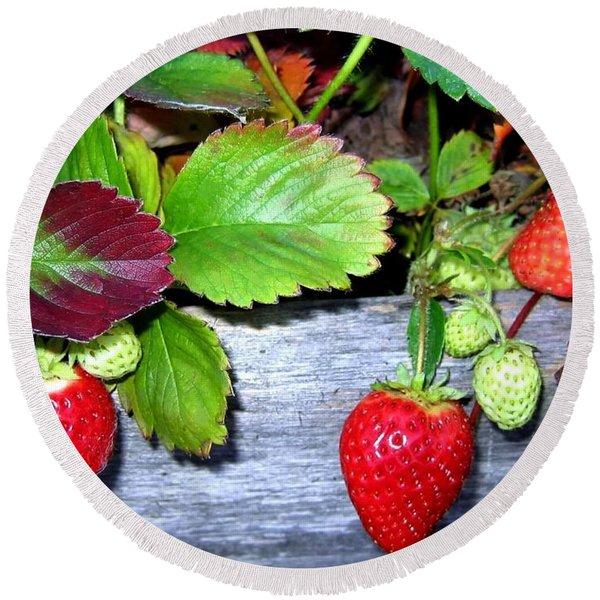 Strawberries Round Beach Towel