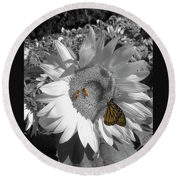 Sunflower In Black And White Round Beach Towel