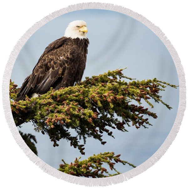 Round Beach Towel featuring the photograph Surveying The Treeline by Tim Newton